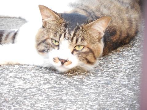 通りすがりに見かけた猫(786)