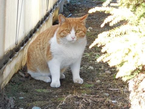 通りすがりに見かけた猫(787)