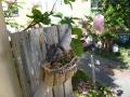 ナンフェア バラと多肉植物
