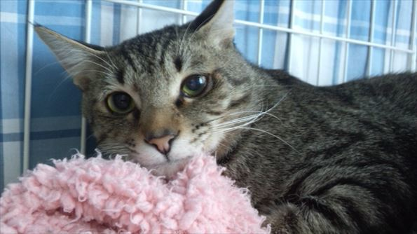 小樽銭函の猫たち~にーに190512~_R