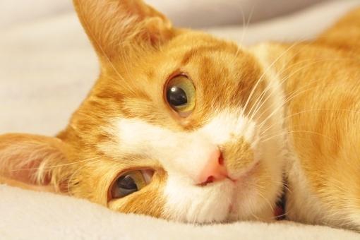 cat6354.jpg