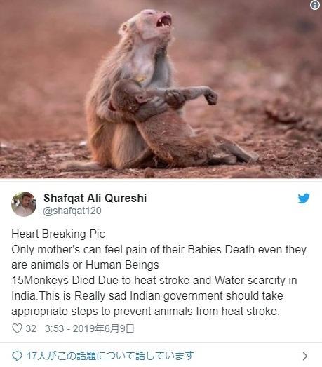 【インド】1週間以上にわたって「気温50℃」近い猛暑の影響により「サル達が熱中症、水場争い」で相次いで死ぬ事態に