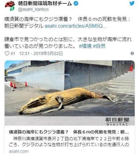【前触れ】神奈川県で「クジラ」漂着相次ぐ…21日、鎌倉でクジラが打ち上げられる → 22日には横須賀にも打ち上げ