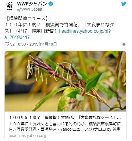 【前触れ】神奈川県の横須賀で100年に1度と言われる「竹の花」が咲く…専門家「大変珍しい」