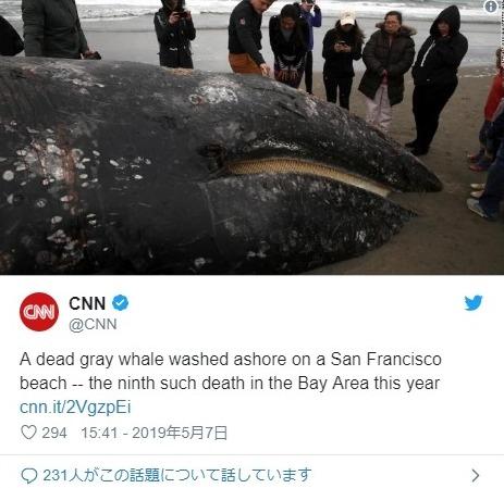 【海洋】アメリカ西海岸で「クジラ」9頭が相次いで打ち上がっているのが見つかる…専門家「異常事態だ」
