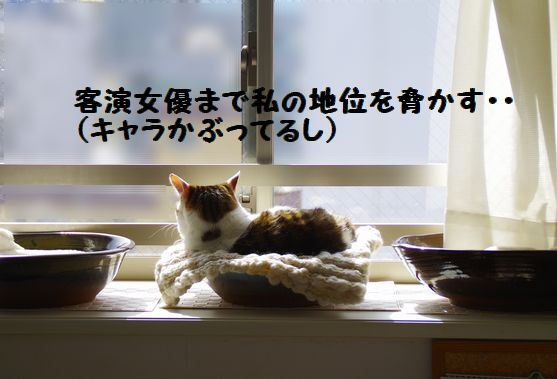 みーたん記念日③