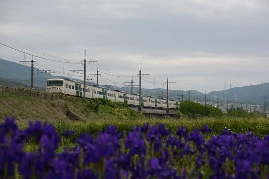 9372M 185系団臨と菖蒲