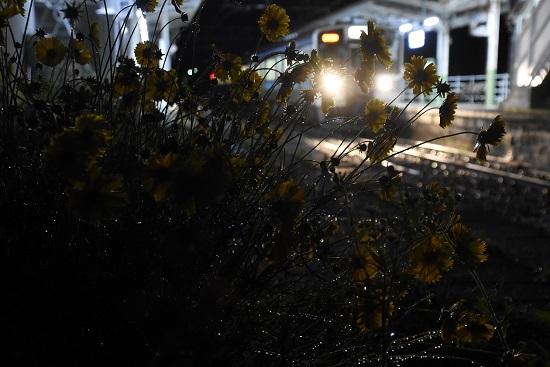 回9134M 211系 雨の中の小野駅