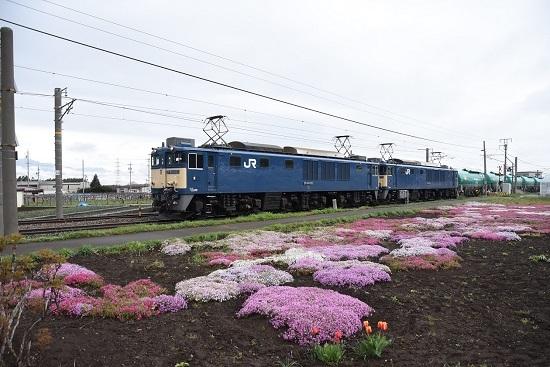 6088レ EF64-1022+1024号機 芝桜と