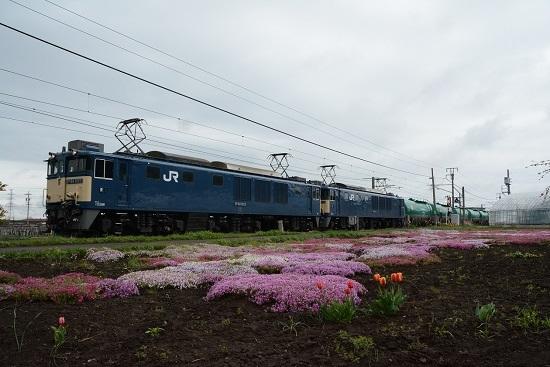 6088レ 原色重連 芝桜とチューリップ