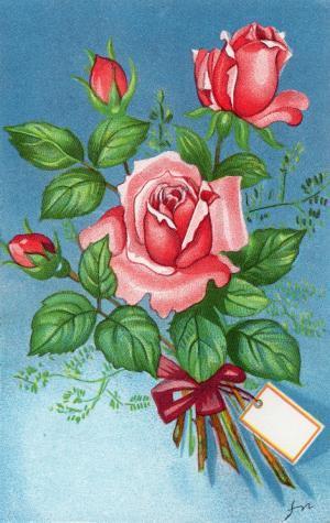 薔薇 フィンランド