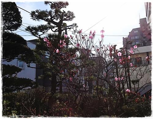 ヤシオDSC_7632