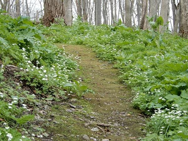 北邦野草園散策路