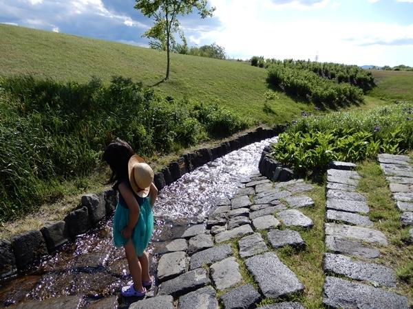 北彩都ガーデン水路メドウ