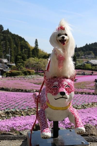 2019.05.22 花のじゅうたん③-2