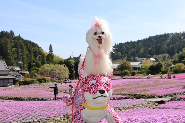 2019.05.22 花のじゅうたん③-4