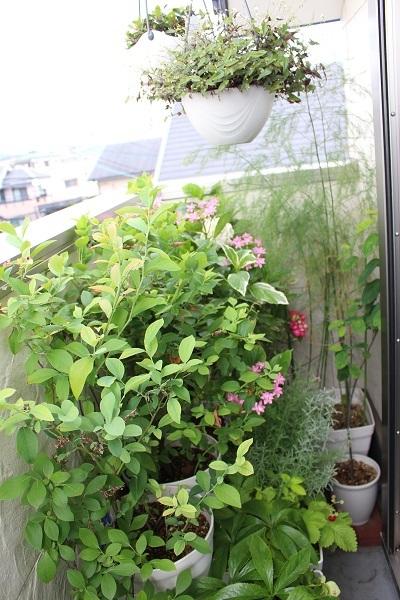 2019.06.14 紫陽花が咲いたよ-1