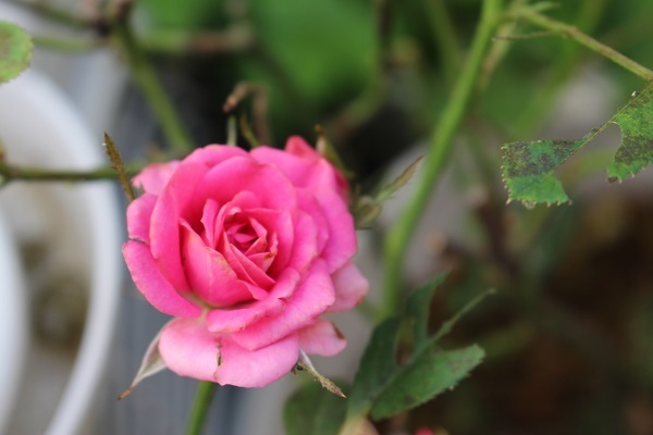 2019.06.14 紫陽花が咲いたよ-7