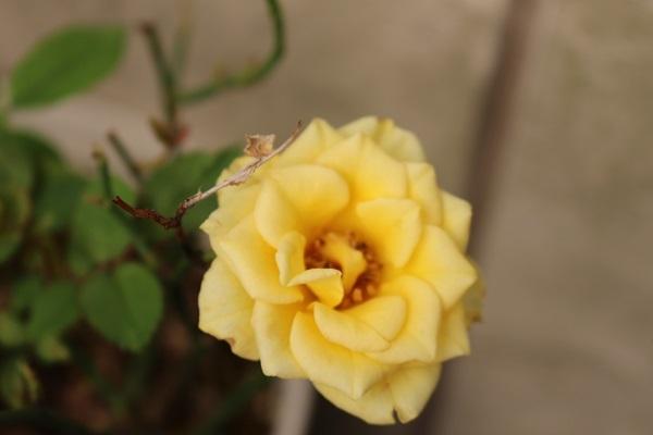 2019.06.14 紫陽花が咲いたよ-8