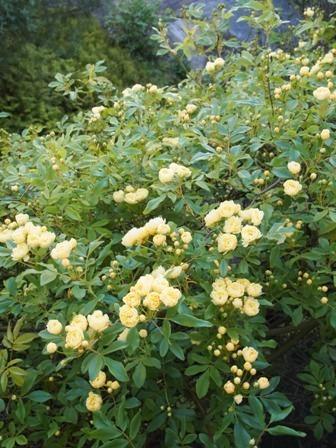 my-garden 006 (2)