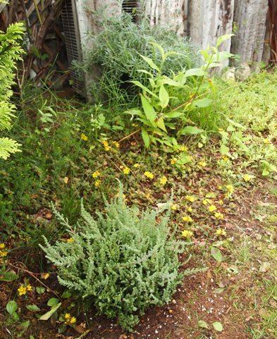 my-garden 080
