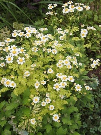 my-garden 028 (2)
