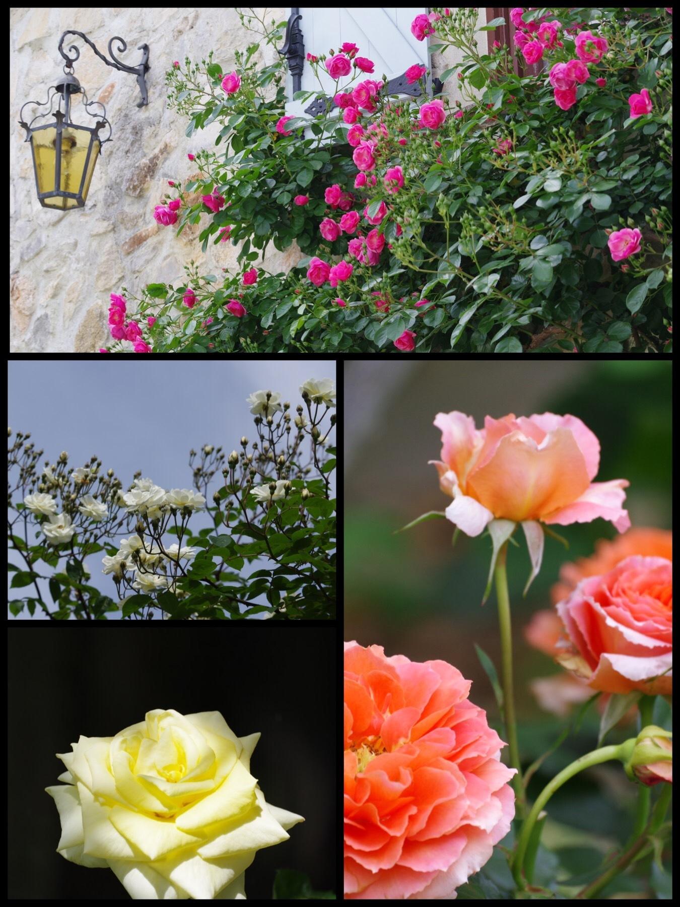 あざみ野うかい亭 美食とバラの庭園 ランチ