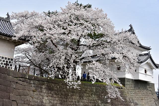 新発田11