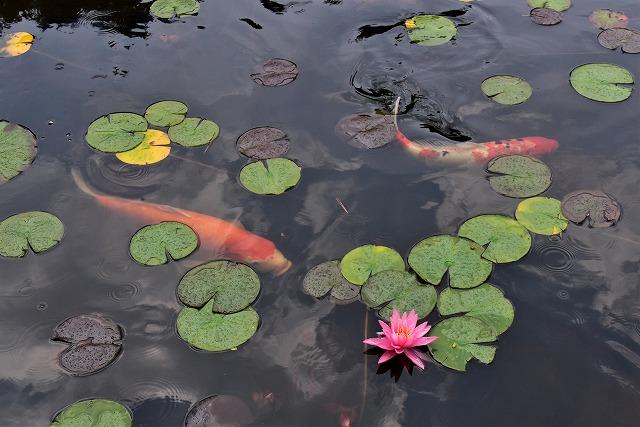 蛇の池11