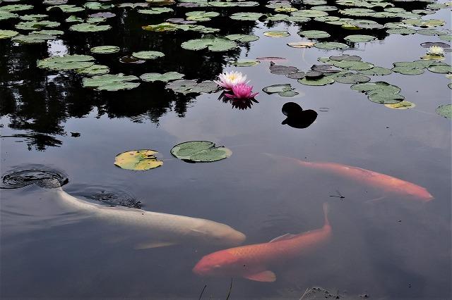 蛇の池13