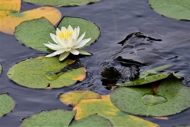 蛇の池16