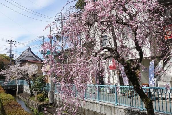 居酒フェ 桜咲(さくさく)