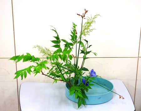 DSC01037_盛り花190613