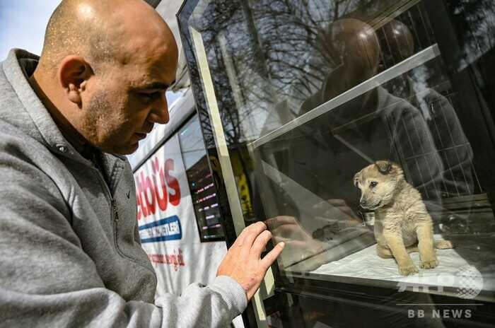 トルコ・イスタンブールを巡回する「動物診療バス」で、新しい飼い主を募集するために展示用のケージに入れられている子犬