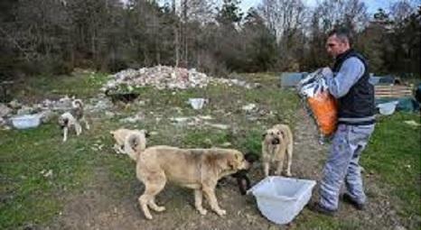 トルコ・イスタンブールで、野良犬たちにドッグフードを与える職員