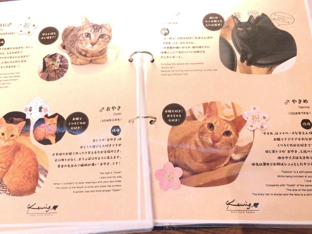 福岡猫カフェ