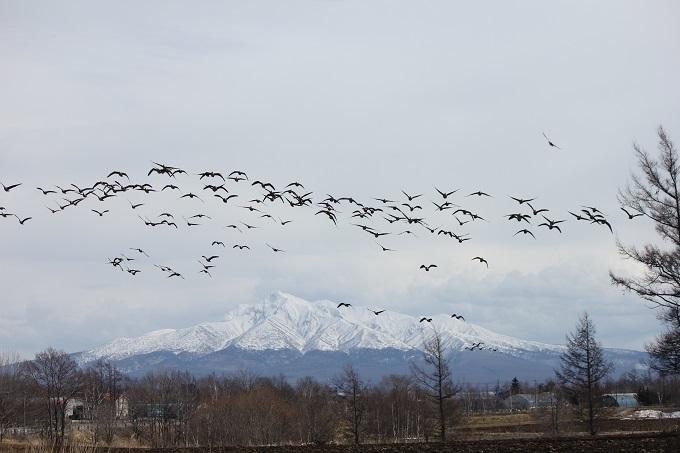 斜里岳とヒシクイ (2)