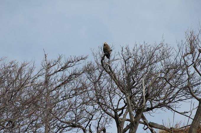 木の上のオジロ
