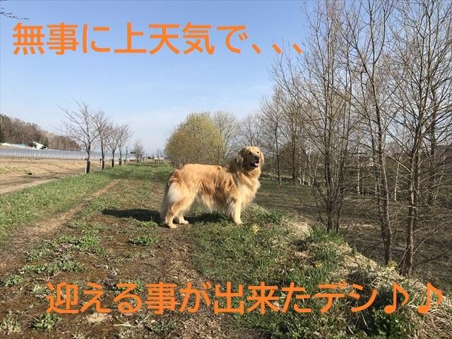 IMG_8429_PPP.jpg
