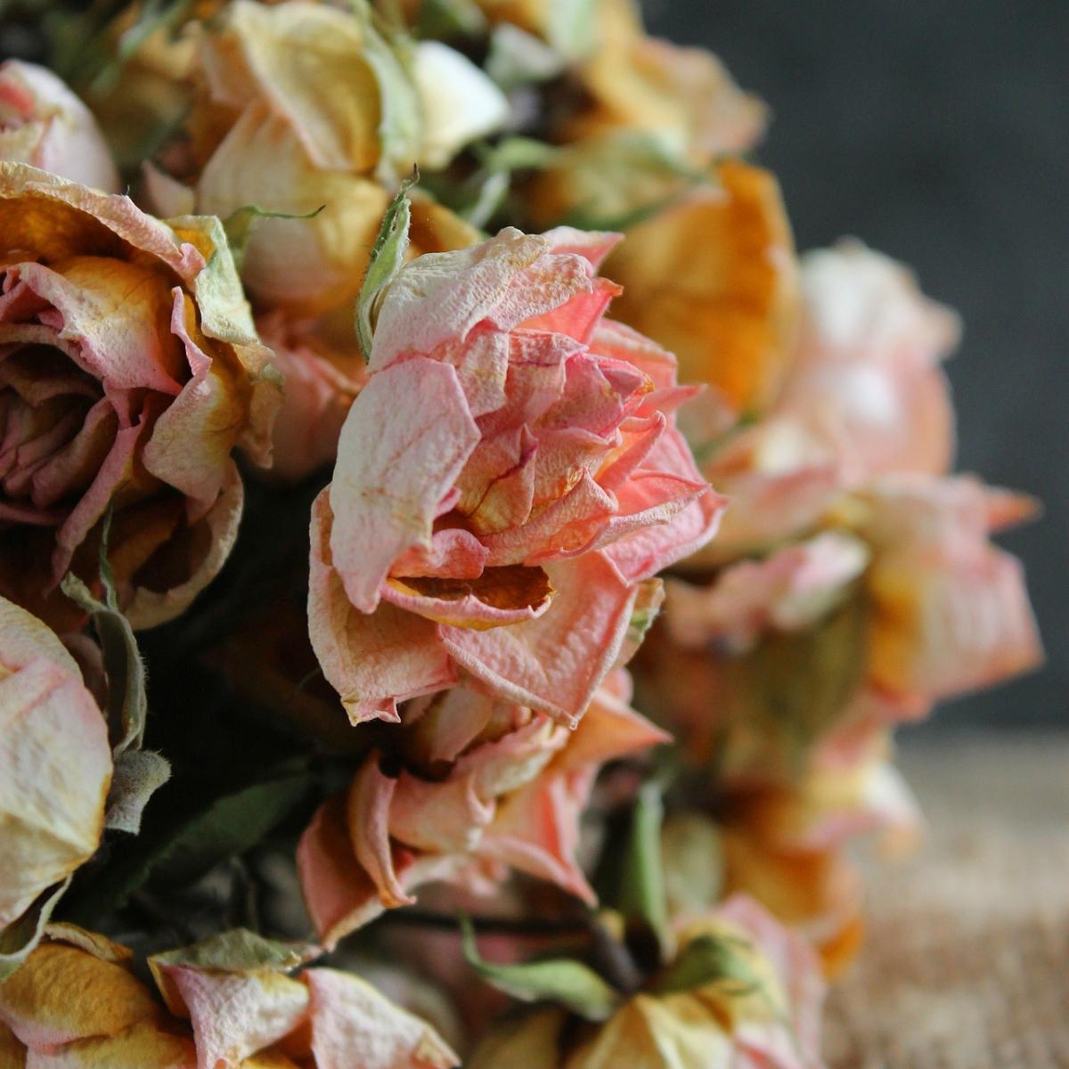 flower-1225811_1920.jpg