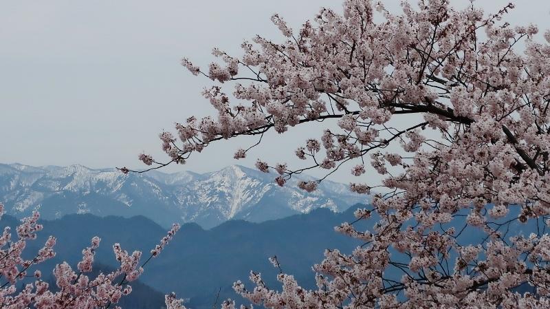 烏帽子山09 (800x449)
