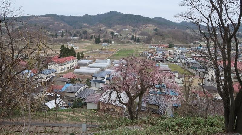 双松公園の慶海桜150年 (800x449)