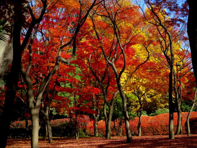 20131130北の丸公園01 (640x480)