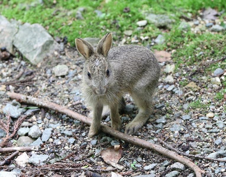 ウサギ1190611