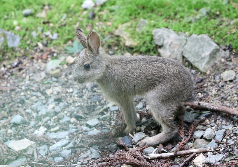 ウサギ2190611