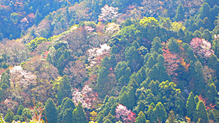 IMG_6757桜