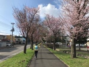 えむサトさんと走る桜満喫ジョグ。