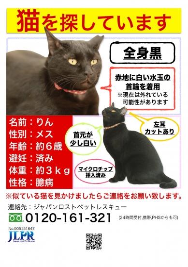 【ポスチラ縦】 田代りんちゃん_page-0001