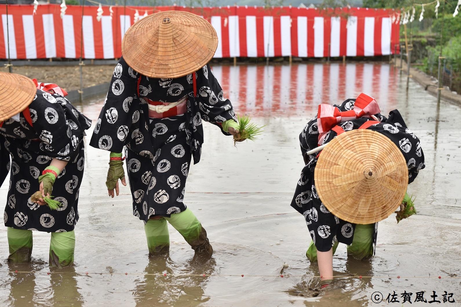 お田植え祭②