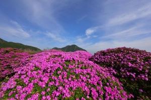KJU_7830_00001_01.jpg